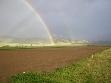 2004 spray millet planting